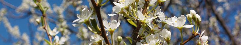 Flores de Bach: los 12 sanadores
