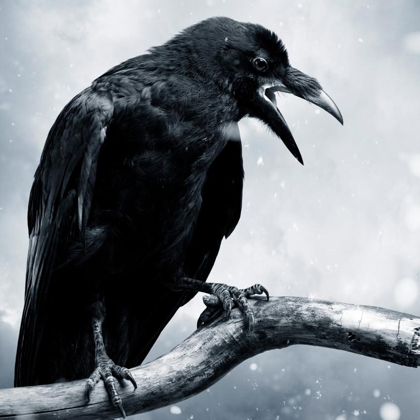 Oroscopo sciamanico: corvo