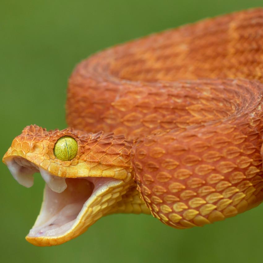 Horóscopo Chamánico: Serpiente