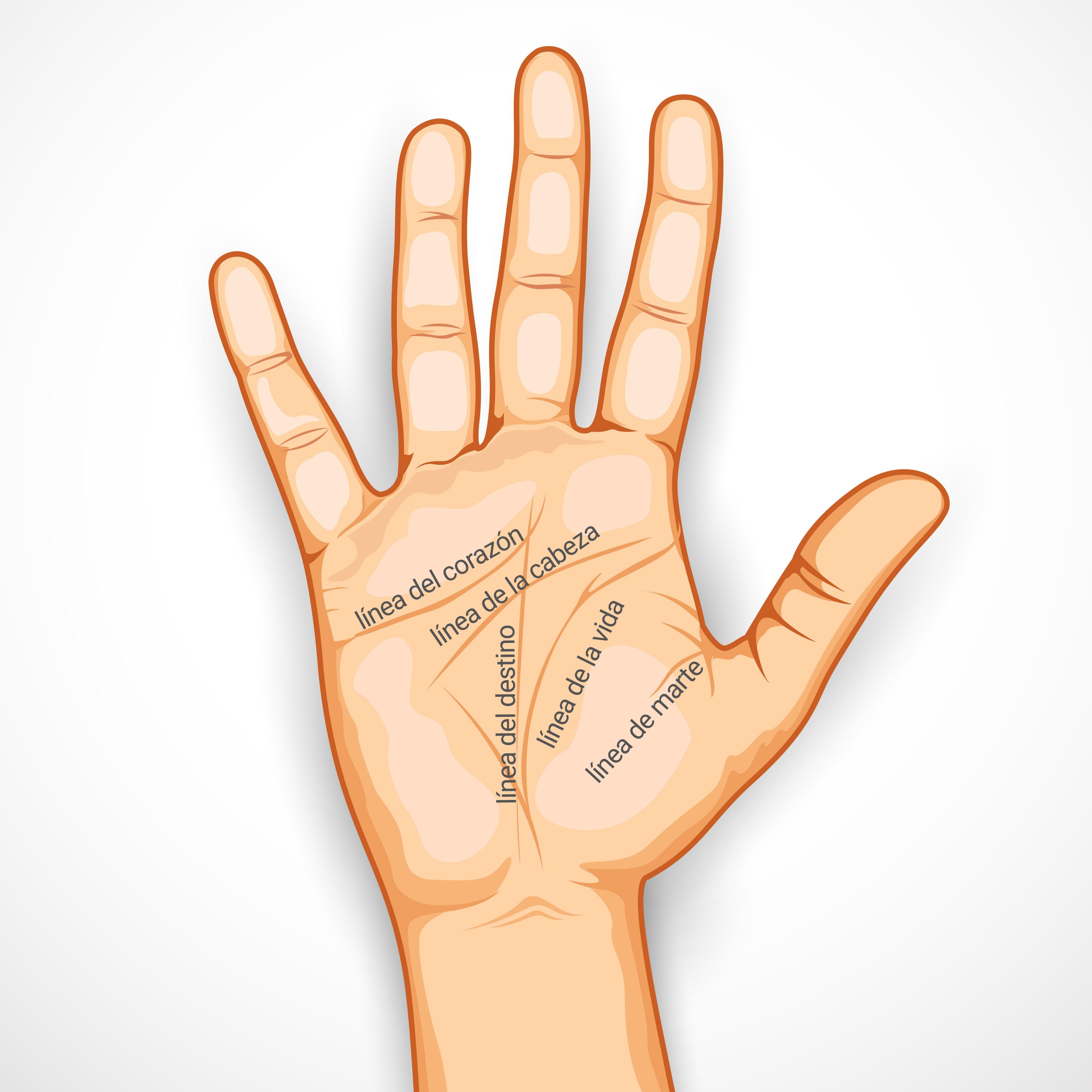 Cómo leer la mano: conoce las líneas